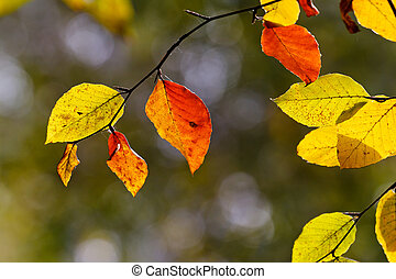 autumn leaf - Bright colored leaves on the branches in the...