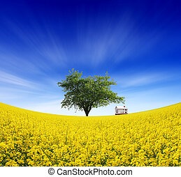 farm fields - summer landscape of farm fields and the...