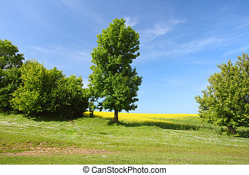 meadow - Tree on green meadow and the blue sky