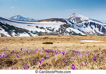 mountain landscape - Springtime is the moment for this...