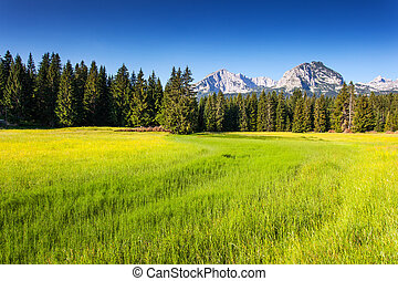 mountains landscape - Wonderful view to mountains in the...