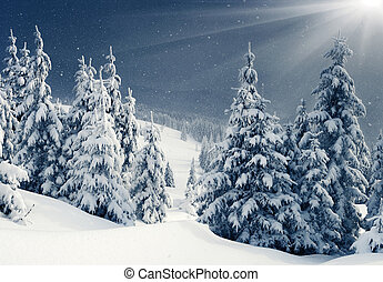 winter - Beautiful winter panorama with snow covered trees