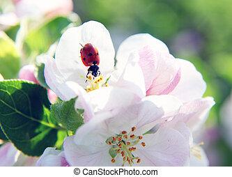 ladybird - Close-up photo of a ladybird walking down a...