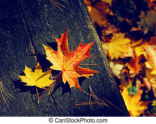 leaves - Colorful autumn leaves on the background a dark old...