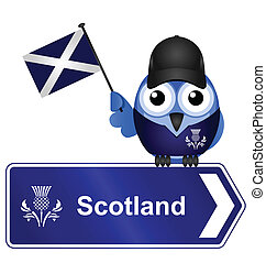 Scotland sign - Comical Scotland sign isolated on white...