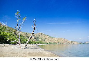 areia branca beach near dili east timor - areia branca beach...