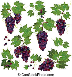 Set of black grape isolated on white background - Set of...