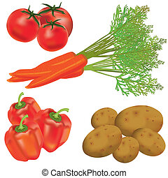 Set of realistic vegetables - Colorful set of realistic...