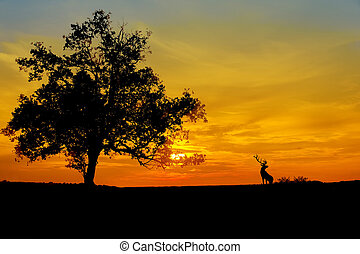 sunset against three silhouette - sunset against three and...