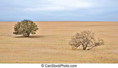 Dry field - Landscape of trees on dry bare weat field