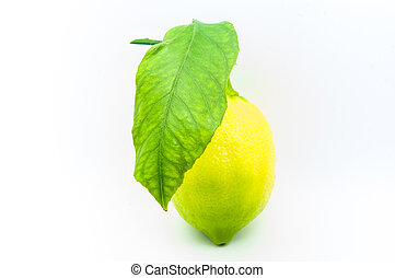 Home grown lemon and a leave at the studio