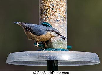 Nuthatch feeding from a bird feeder.