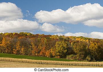 Farm Field Scenic
