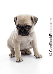 cute sitting puppy