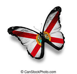 Florida flag butterfly, isolated on white