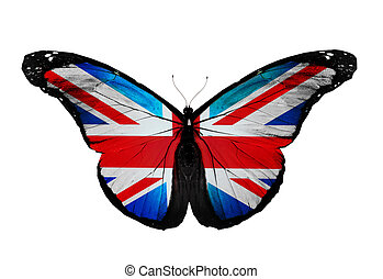 English flag butterfly flying, isolated on white