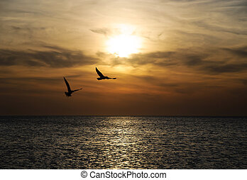 Bright sunset panorama with flying birds under sea surface -...