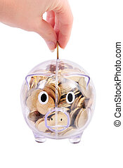 Savings in piggy bank isolated on white background - Savings...
