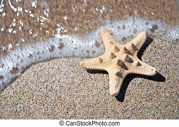 two sea-stars on sand beach with waves background