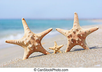 family holiday concept - sea-stars walking on sand beach...