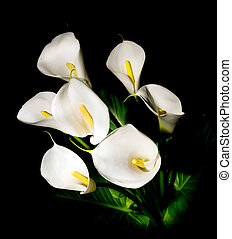 seven white Calla lily on a black background - posy of seven...