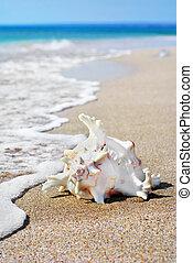 white seashell on beach sand in water - white seashell on...