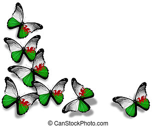 Welsh flag butterflies, isolated on white background