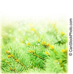 Green spruce border