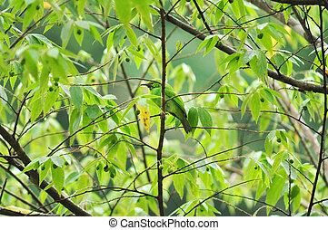 birdin, natureza
