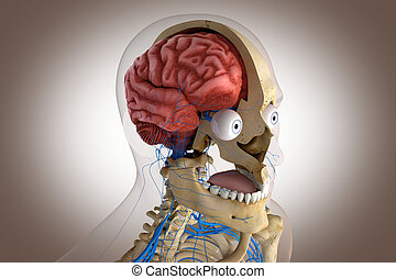 Human anatomy - structure of head brain, eyes etc - 3d...