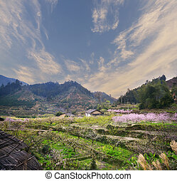 Rural landscape,Peach Blossom in moutainous area in shaoguan district, guangdong province, China,