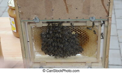 natural honey bee comb - fresh ecological natural honey sale...