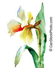 Watercolor illustration of Narcissus flower