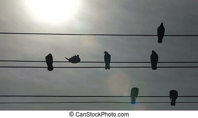 Musical Note - pigeons representing the notes, and telephone...