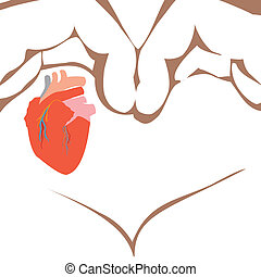 Medical human heart illustration isolated