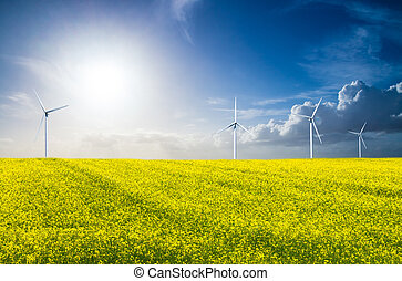 wind energy and rape