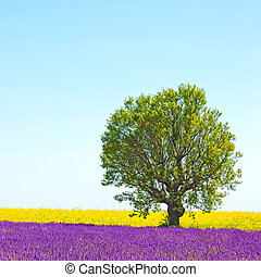 Lavender and yellow flowers blooming field and a lonely tree...