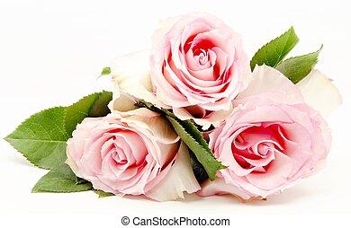 roses - Natural roses