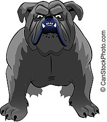 bulldog - a defiant, mean looking bulldog facing the viewer