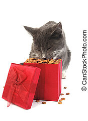 Cat Christmas - Grey cat eating food out of a Christmas gift...
