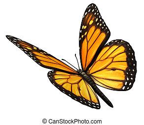 monarca, mariposa, angular