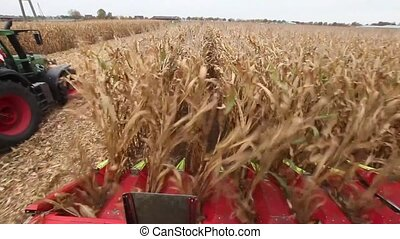 Chopping maize or corn for silage - Closeup high angle view...
