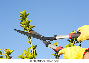 Garden work pruning tree sky background - Hands with gloves...