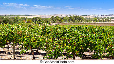Barossa Valley - Famous wine region the Barossa Valley near...