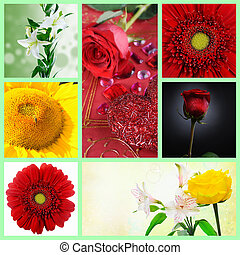 Beautiful set of flowers - Collage of a beautiful set of...