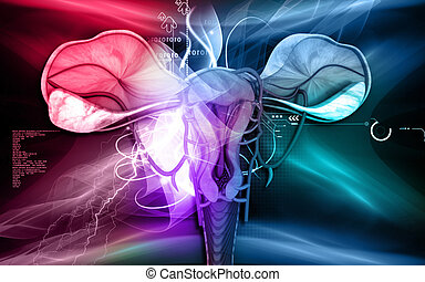 Uterus - Digital illustration of Uterus in colour background...