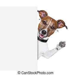 dog banner - dog  with glasses behind a white banner waving