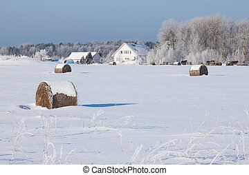 Farm with a barn and horses in winter - Farm with a barn,...