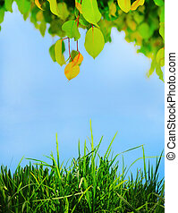 Green leaf on a tree - Green branch of a tree with leaf in...