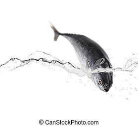 Tuna fish jumping in the water